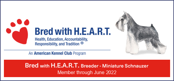 BREAD WITH HEART BANNER 2020